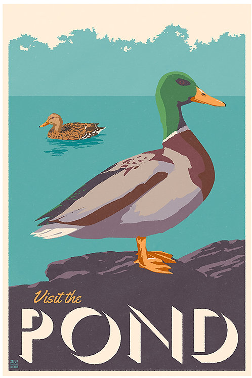 Pond ducks