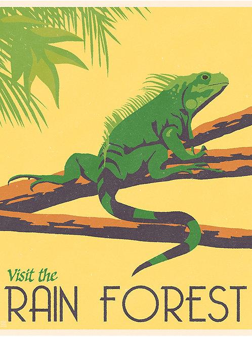 Rain Forest Iguana