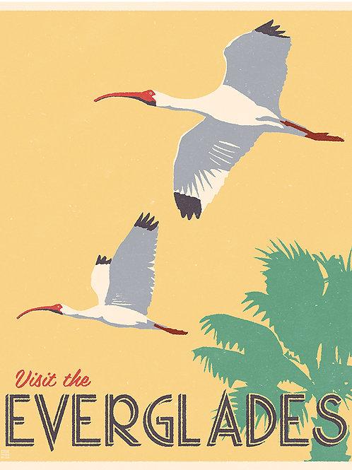 Everglade Ibris