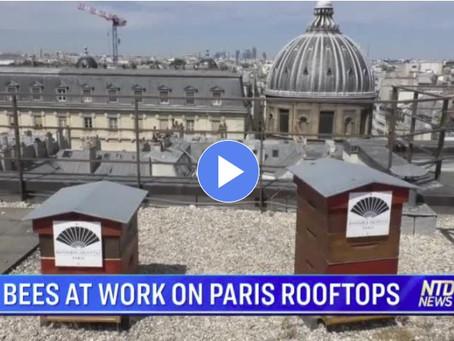 Reportage de NTD News sur les Miels et Nougats de Paris