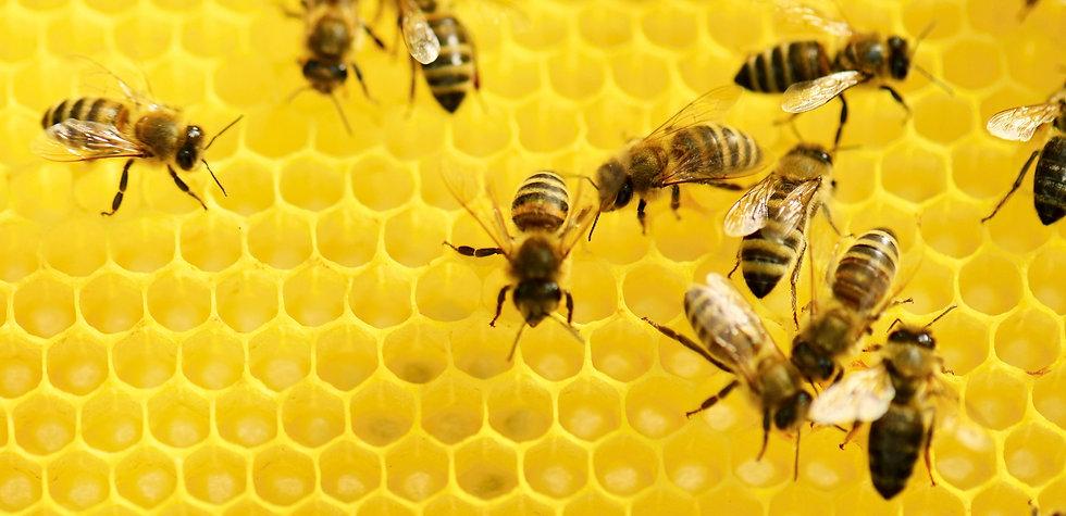 Bees%20at%20Work_edited.jpg