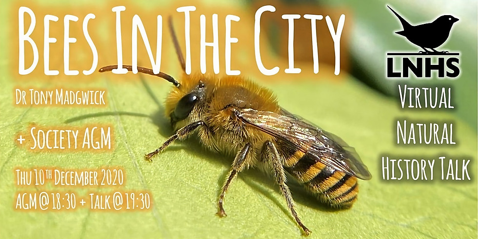 Bees in the City- by Dr. Tony Madgwick