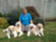 Dog Training Ashford