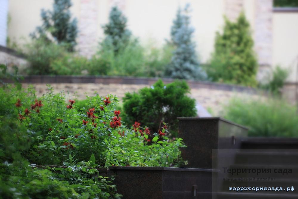 Пряно-ароматичные растения в вашем саду. Это не только декоративность, но и польза, возможность почувствовать частичку вашего сада, его аромат в кружке чая зимой)))