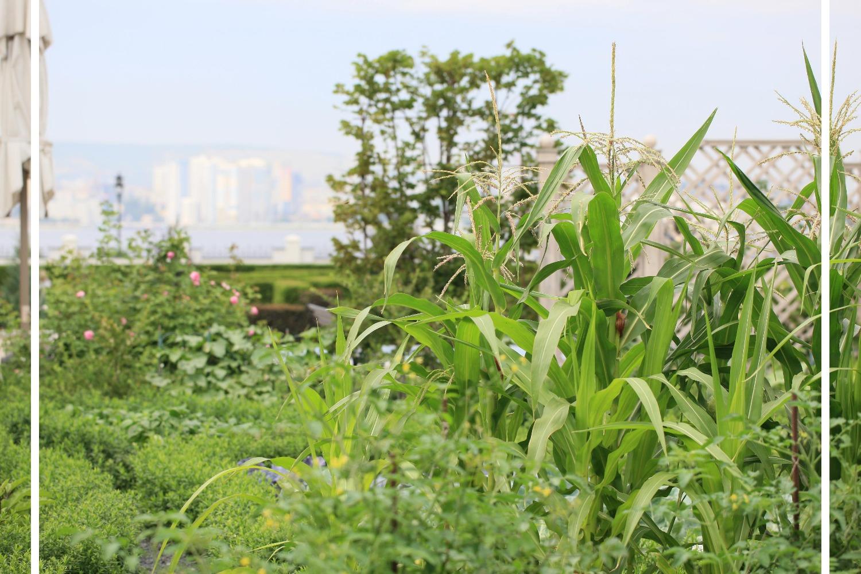 лабиринт_декоративный огород