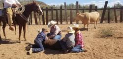 branding cattle