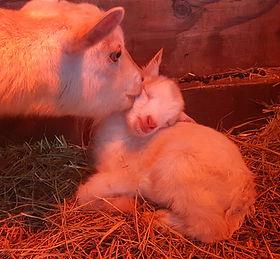 willow kissing son.jpg