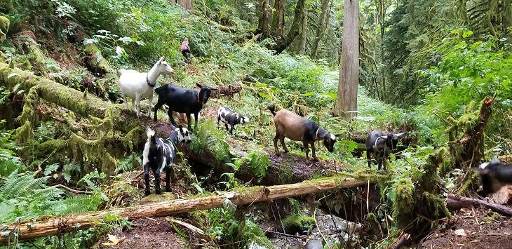 herd walk.jpg