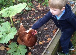 Visiting Alec's hens!