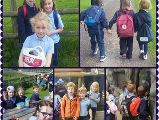Junior Room Trip to Fota