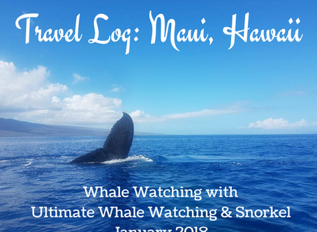 Travel Log: Whale Watching in Maui