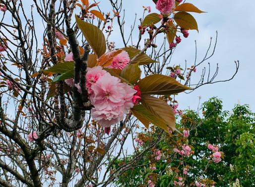 Три совета на весну