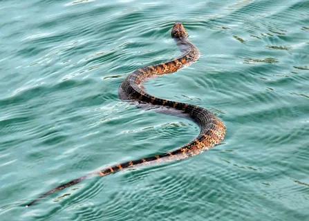 Май - месяц водной змеи