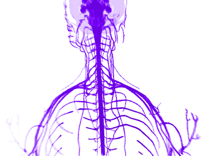 Stress in your Nervous System