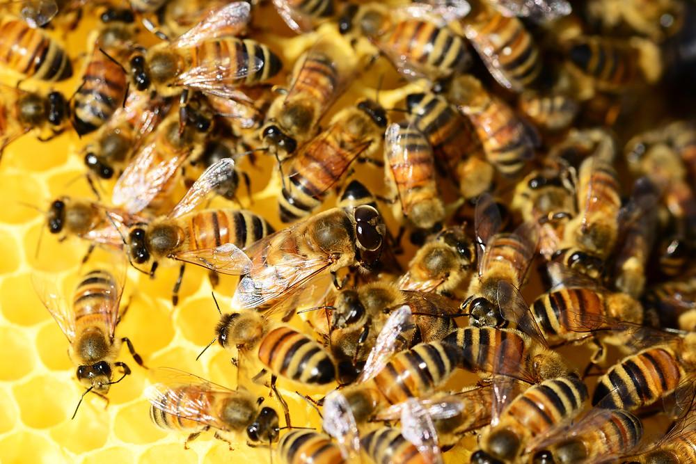 En directe de la ruche