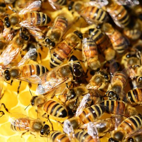 L'essentiel du miel