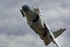 Harrier .jpg