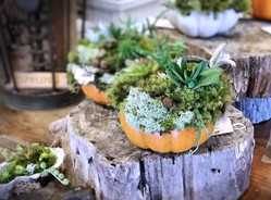 Succulent Gardens by Anita Goehringer