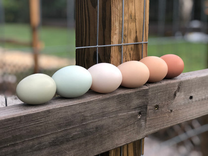 Our very own eggs!