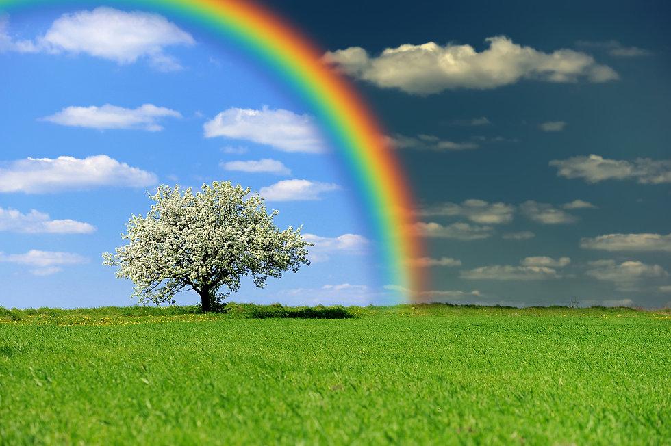 split_sky_tree.jpg