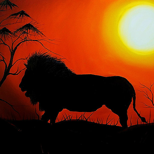 African Lion At Sunset #12