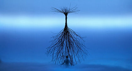 alberi wilson 1.jpg