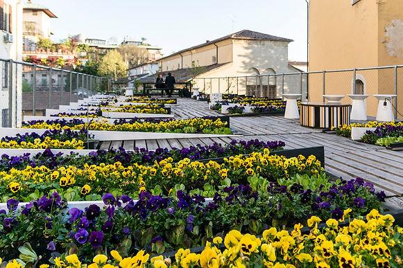 ROOFmatters_tetti verdi per città resili