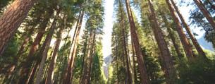 forest_background_3.jpg