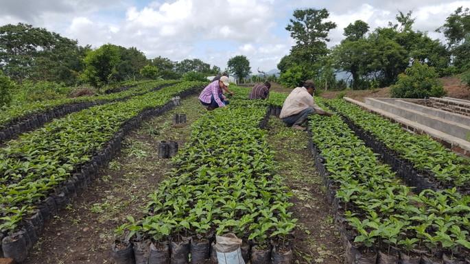 CommuniTree Limay_Nicaragua_24.jpg