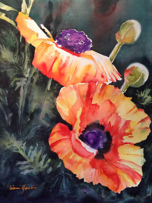 Sun Touched Poppies