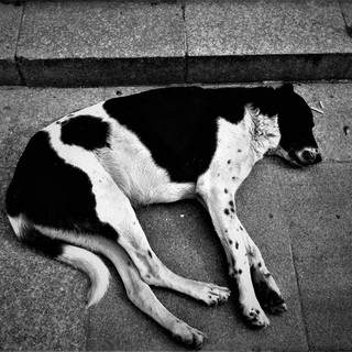 Concrete is my pillow
