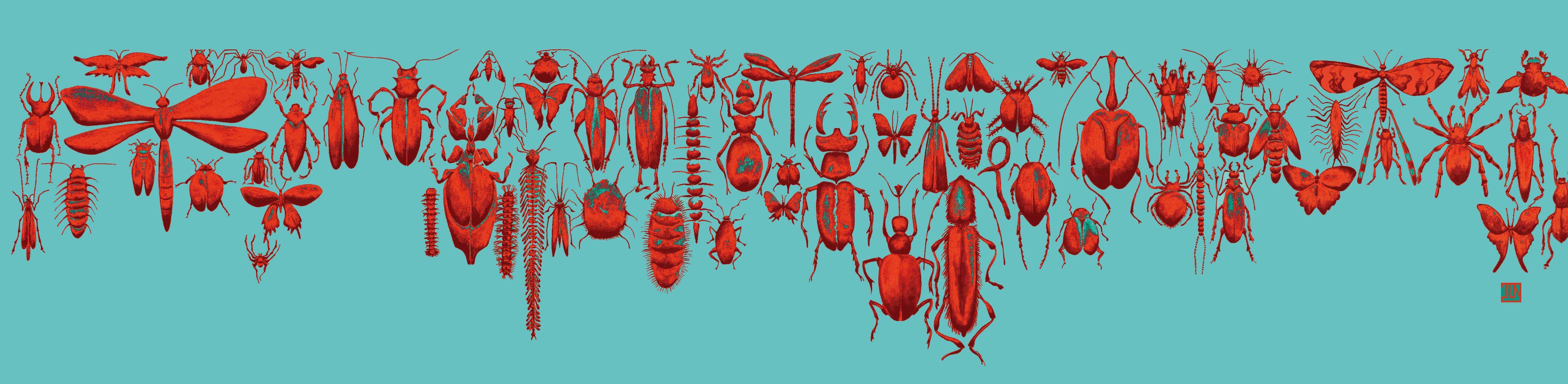 insectes en frise