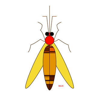 Graphisme Insecte