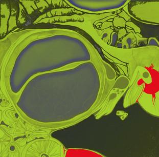 Recherche graphisme/couleurs naissance organisme