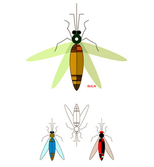 Graphisme Insectes
