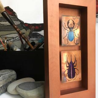 insectes scarabées purple&blue
