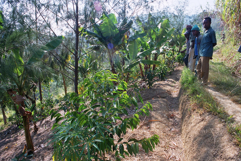 Remote Village Coffee garden