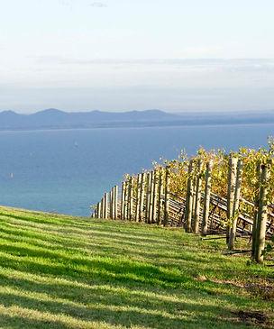 Geelong-wineries-1920x855.jpg