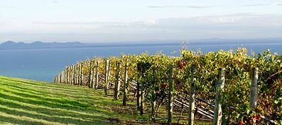 Geelong-wineries-1920x855.jpg