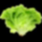 vegs_green_lettuce.png