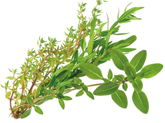 Herbs-Italian_edited.jpg