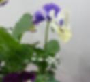Harvest_flower.png