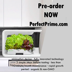 Pre-order in PerfectPrime.png