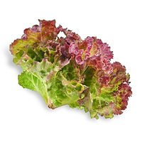 vegs_red_lettuce3_edited.jpg