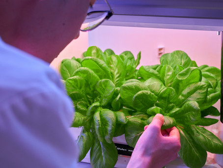 What is hydroponic?