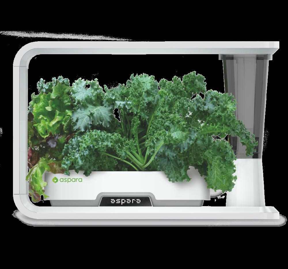Kale in aspara nature