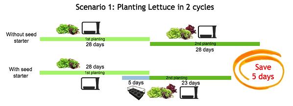 seed starter example timeline_lettuce_en