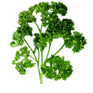vegs_parsley.png