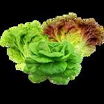 vegs_mix_lettuces.png