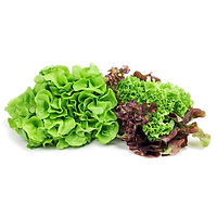 vegs_lettuces-selected3_edited.jpg